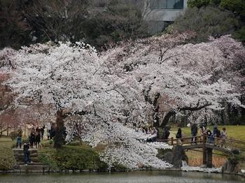 120407小石川後楽園桜 (36)_R.JPG