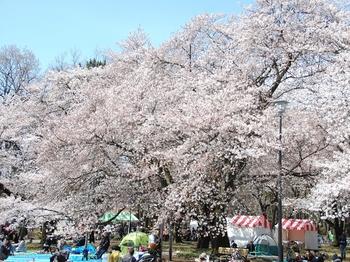 120407小金井公園 (20)_R.JPG