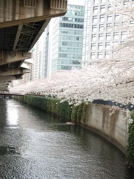 120407後楽園桜 (4)_R.JPG