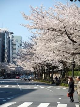 120408靖国通桜 (5)_R.JPG