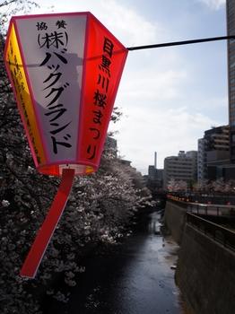 130322中目黒桜 (92)_R.JPG