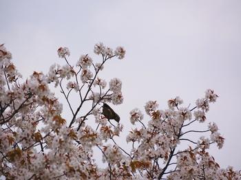 130323小石川植物園 (57-2)_R.JPG