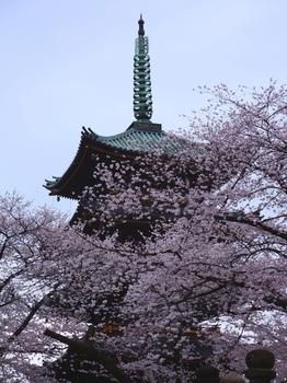 130324上野公園桜 (75-2)_R.jpg