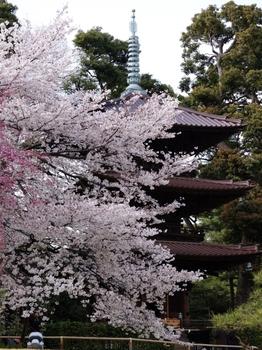 130324神田川桜 (33-2)_R.jpg