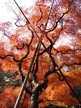新宿御苑101127 (14)_S.JPG