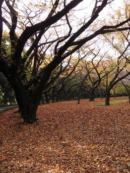 新宿御苑101127 (37)_S.JPG